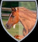 horses-sts